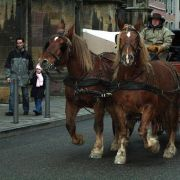 Noël 2014 à Thann : Promenades en calèche