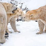 Que fait-on des animaux du Zoo en hiver ?