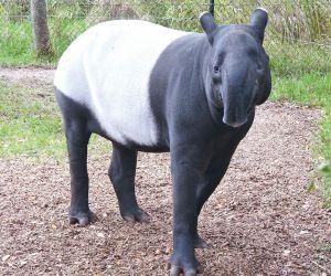 Quoi de neuf au Zoo de Mulhouse pour le printemps 2020 ?