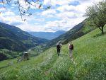 La randonnée, un sport idéal pour parcourir les Vosges d\'Alsace.