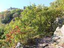 Escapade à Ribeauvillé, la belle médiévale