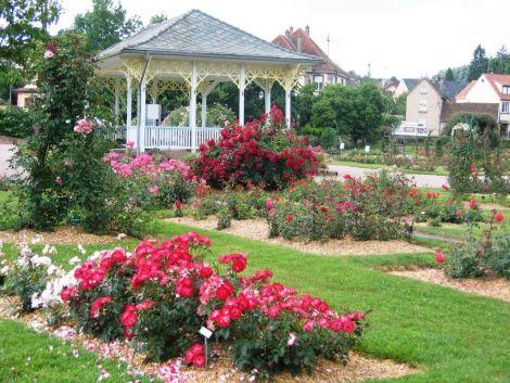 La Roseraie de Saverne dispose de plus de 550 espèces de roses différentes