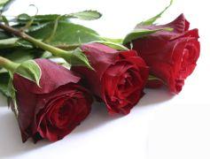Quoi de mieux qu\'un joli bouquet de roses pour faire plaisir à l\'être aimé ?