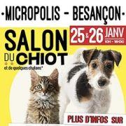 Salon du chiot à Besançon 2020