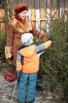 Sapin de Noël : comment le choisir ?