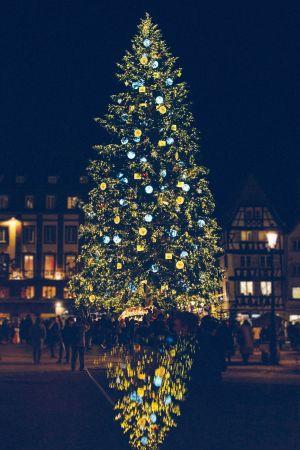 Le sapin du marché de Noël de Strasbourg, sur la Place Kléber