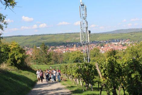 Les hauteurs de Bischoffsheim à découvrir en marchant