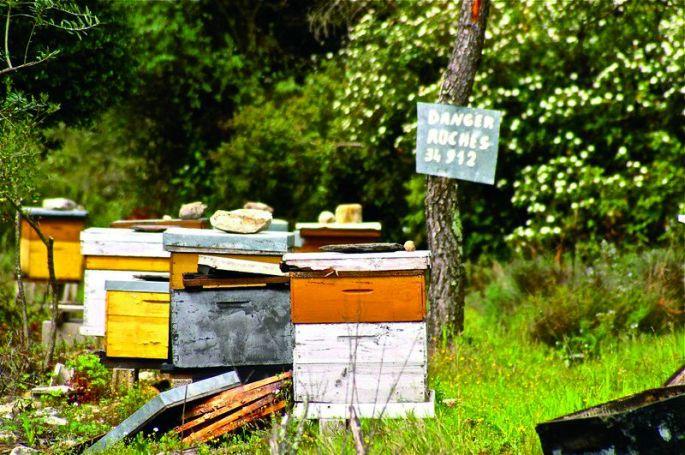Tenir sa ruche