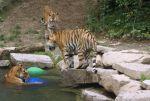 Le Zoo est l\'occasion d\'observer des animaux qu\'on ne croise pas tous les jours!