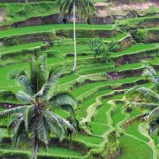 Bali, la magnifique