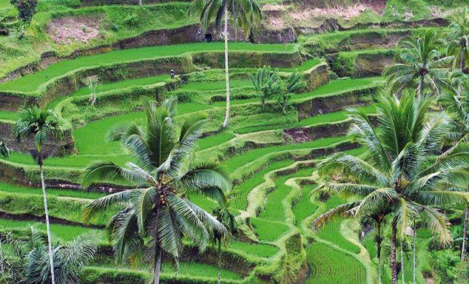 Tour à vélo dans les rizières