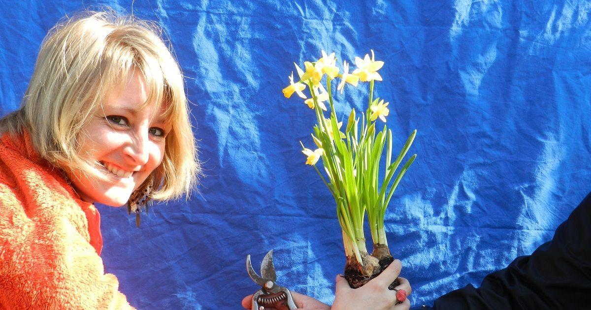 Troc 39 jardin au parc de wesserling 2015 husseren for Jardin wesserling