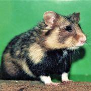 5 animaux sauvages à voir en Alsace