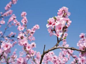 https://www.jds.fr/medias/image/un-printemps-en-alsace-un-printemps-en-alsace-vs-y-2-62071