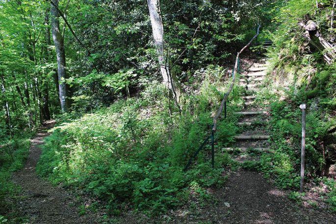 Un sentier botanique