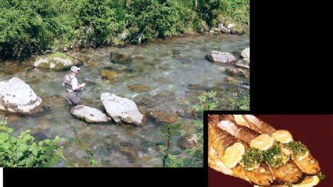 La truite vit dans les torrents, rivières ou lacs