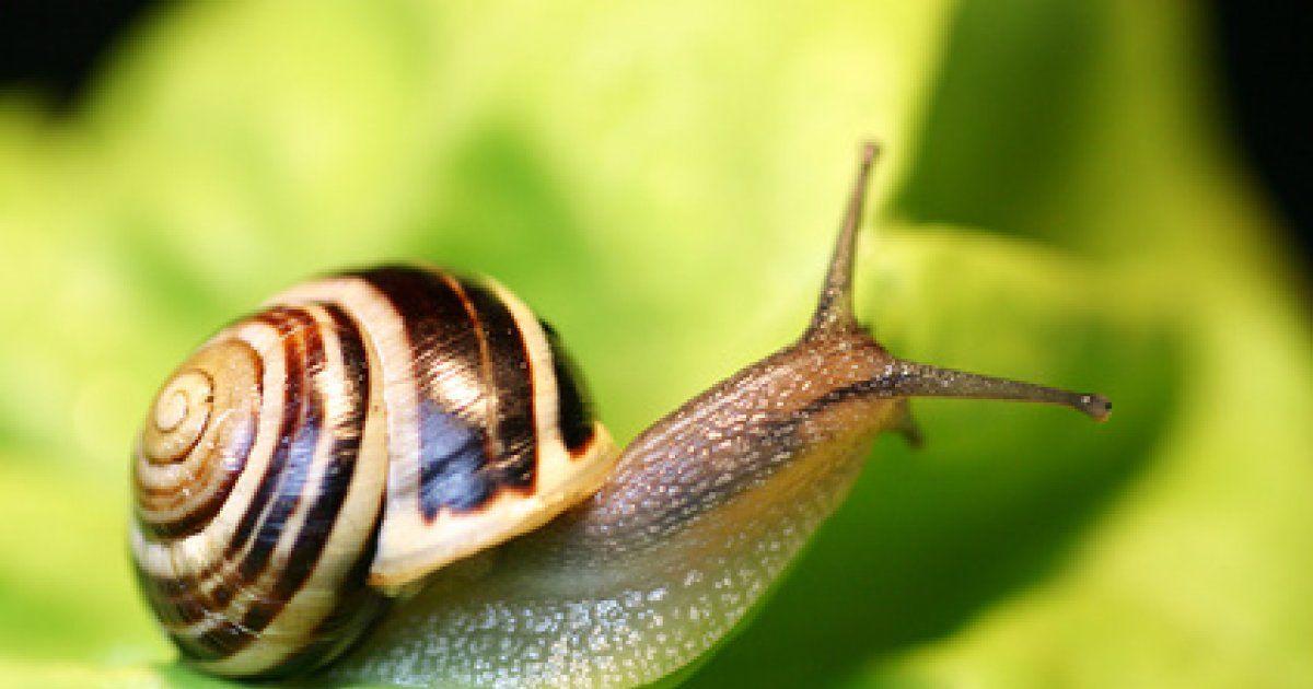 Comment chasser les escargots de notre jardin for Escargot decoration jardin