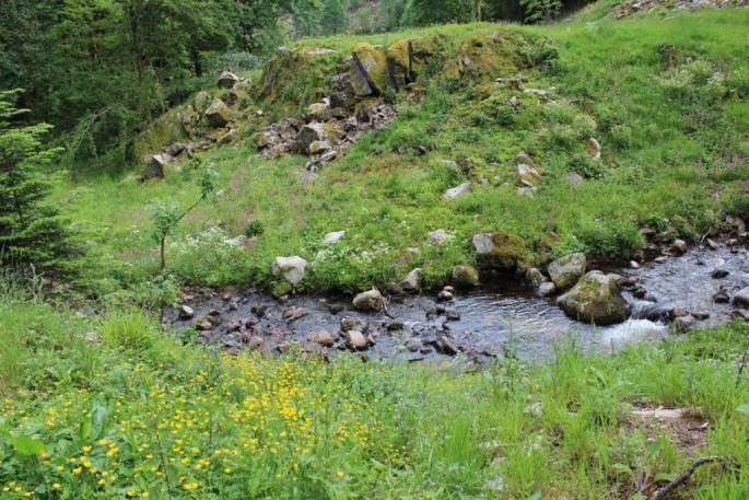 La rivière Wormsa