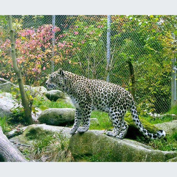 les animaux sont la f te au zoo de mulhouse saison 2008 actu tourisme et loisir. Black Bedroom Furniture Sets. Home Design Ideas