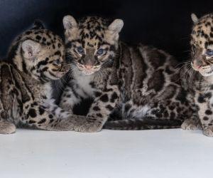 Des boas de Madagascar au zoo de Mulhouse