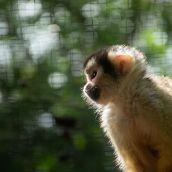 Zoo du Bassin d'Arcachon - Zoo de La Teste de Buch