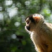 Zoo du Bassin d\'Arcachon - Zoo de La Teste de Buch